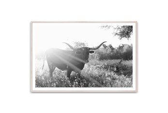 Picture-Texas Longhorn Cow 60X40