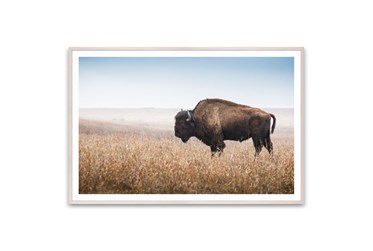 Picture-American Bison 60X40