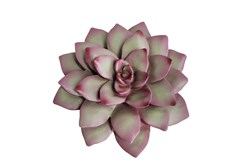 8 Inch Pink And Green Succulent Wall Decor