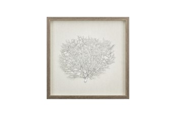 Picture-Silver Sea Fan Shadowbox 18X18