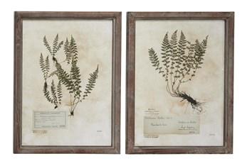 21X28 Inch Fern Botanical Wall Art- Set Of 2