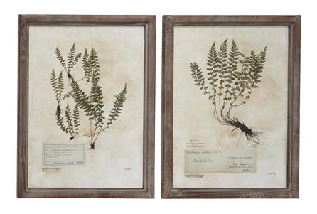 21X28 Inch Fern Botanical Wall Art- Set Of 2 - Main