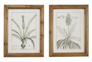 17X21 Inch Black & White Vintage Botanical Wall Art-Set Of 2