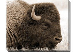 50X40 Buffalo With Gallery Wrap Canvas