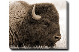 24X20 Buffalo With Gallery Wrap Canvas
