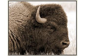 Picture-Buffalo Birch Frame 52X42