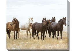 50X40 Wild Horses With Super Gallery Wrap Canvas