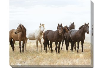 Picture-Wild Horses Super Gallery Wrap Canvas 50X40