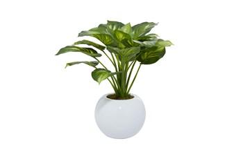 "23"" Artificial Eva Hosta Plant In White Pot"