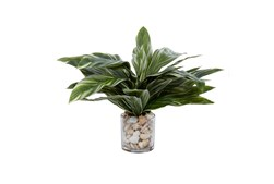 """19"""" Artificial Hosta Plant In Glass Vase With Sea Shells"""