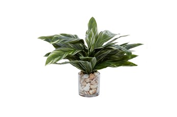 "19"" Artificial Hosta Plant In Glass Vase With Sea Shells"