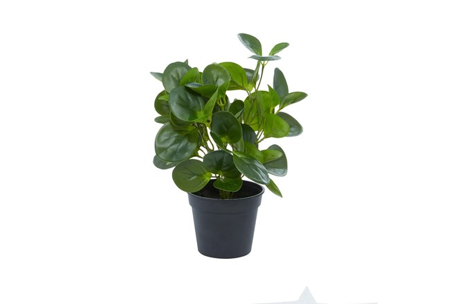 """14"""" Artificial Peperomia Plant - 360"""