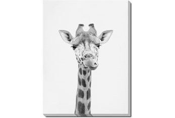20X24 Giraffe With Gallery Wrap Canvas
