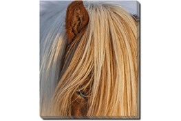 20X24 Horse Hair Don't Care With Gallery Wrap Canvas