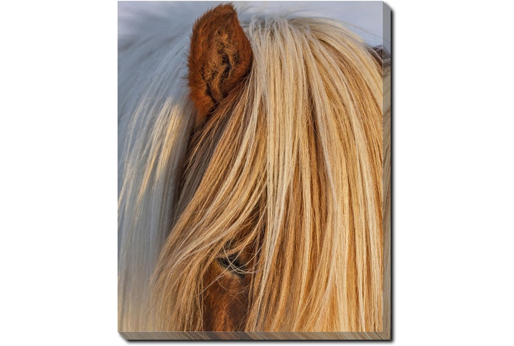 40X50 Horse Hair Don't Care With Gallery Wrap Canvas