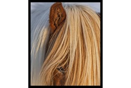 22X26 Horse Hair Don't Care With Black Frame