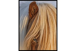 32X42 Horse Hair Don't Care With Black Frame