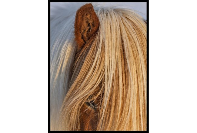 32X42 Horse Hair Don't Care With Black Frame - 360