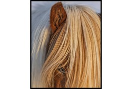 42X52 Horse Hair Don't Care With Black Frame