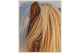 42X52 Horse Hair Don'T Care With Gold Champagne Frame