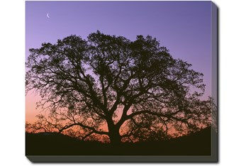 24X20 Tree At Sunset With Gallery Wrap Canvas