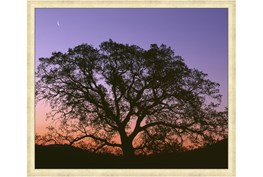 52X42 Tree At Sunset With Gold Champagne Frame