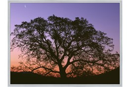 52X42 Tree At Sunset With Silver Frame