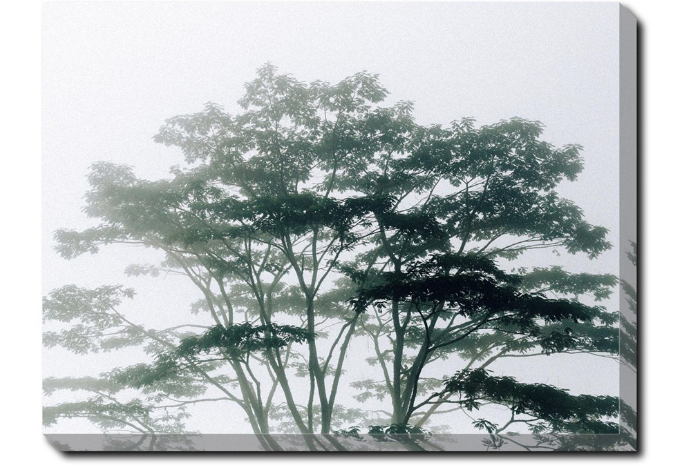 40X30 Trees Tranquil Moment With Gallery Wrap Canvas