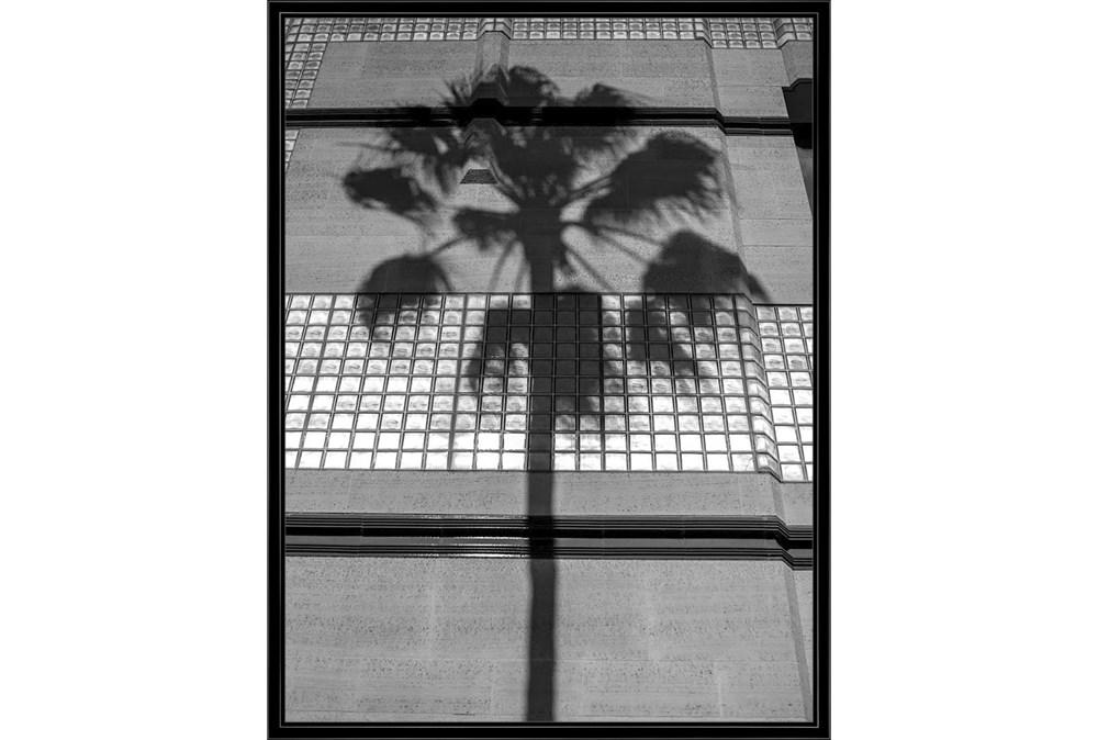 32X42 B&W Palm Tree With Black Frame