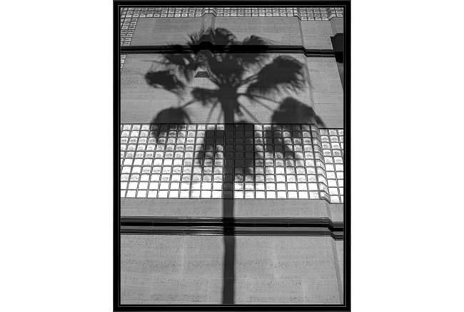 32X42 B&W Palm Tree With Black Frame - 360