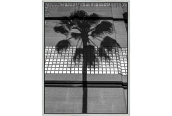 32X42 B&W Palm Tree With Silver Frame