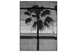 32X42 B&W Palm Tree With White Frame