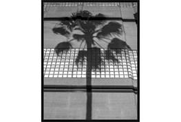 42X52 B&W Palm Tree With Black Frame