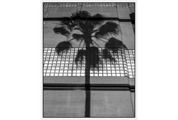 42X52 B&W Palm Tree With White Frame