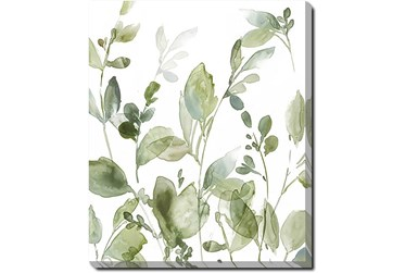 20X24 Botanical Watercolor With Gallery Wrap Canvas