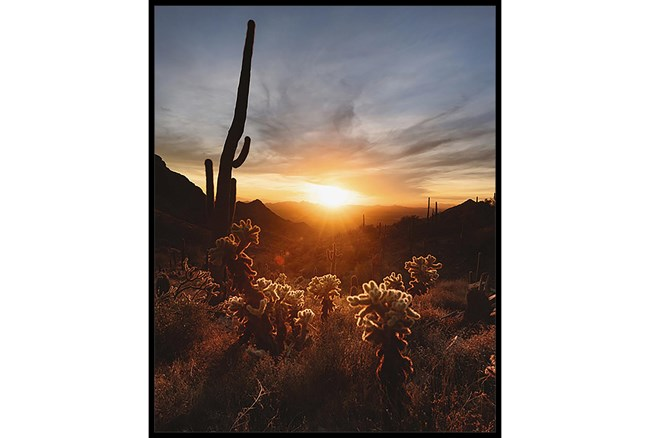 42X52 Cactus Sunset With Black Frame - 360