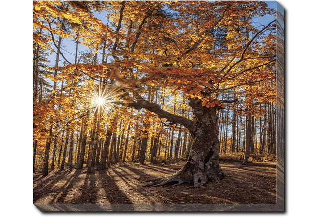 24X20 Fall Landscape With Gallery Wrap Canvas - 360