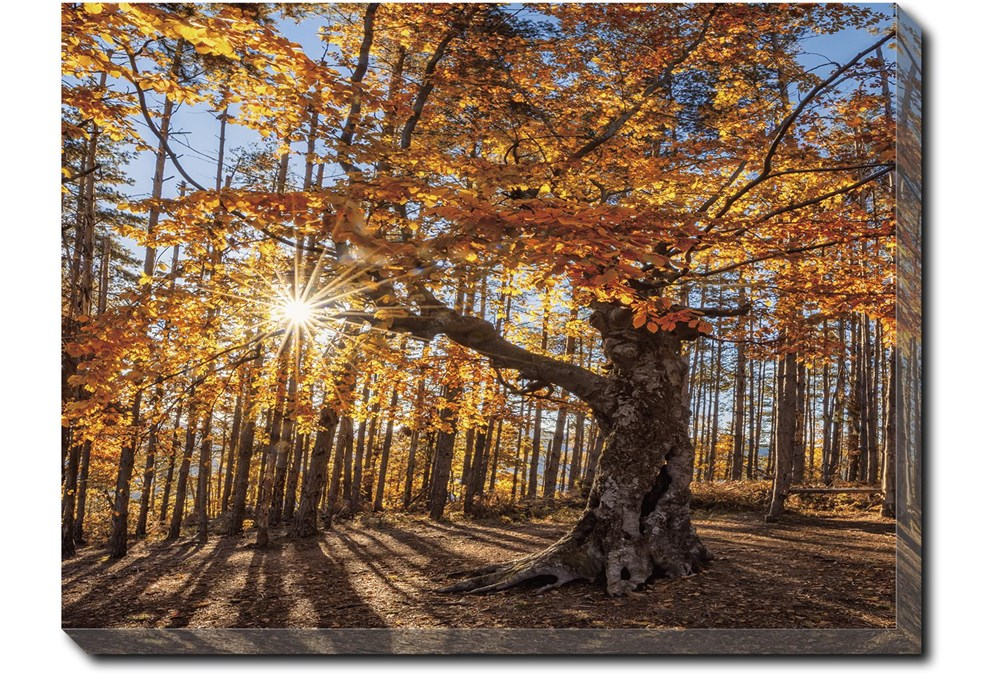 40X30 Fall Landscape With Gallery Wrap Canvas