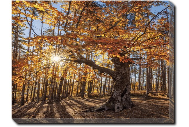 40X30 Fall Landscape With Gallery Wrap Canvas - 360