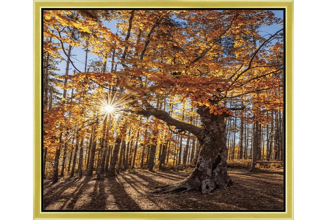 26X22 Fall Landscape With Gold Frame  - 360