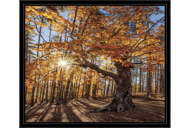 26X22 Fall Landscape With Black Frame  - 360