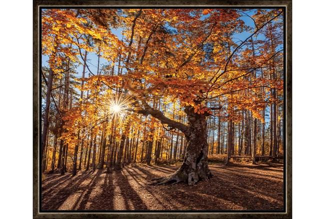26X22 Fall Landscape With Espresso Frame - 360