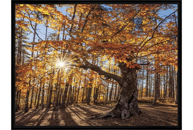 42X32 Fall Landscape With Black Frame  - 360