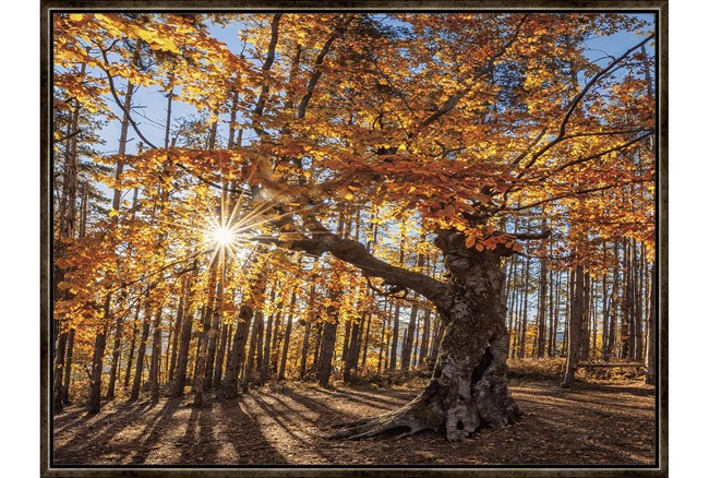 42X32 Fall Landscape With Espresso Frame  - 360
