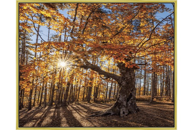 52X42 Fall Landscape With Gold Frame  - 360