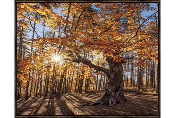 52X42 Fall Landscape With Espresso Frame