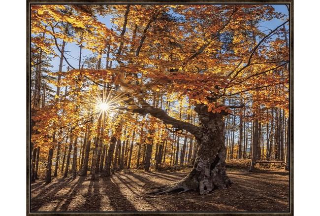 52X42 Fall Landscape With Espresso Frame  - 360
