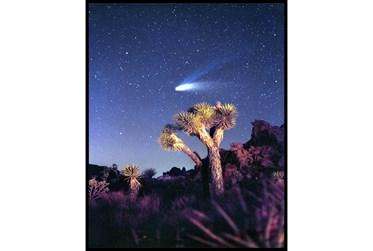 42X52 Joshua Tree Np Haley'S Comet With Black Frame