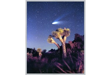42X52 Joshua Tree Np Haley'S Comet With Silver Frame