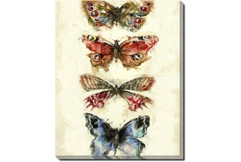 30X40 Butterflies With Gallery Wrap Canvas